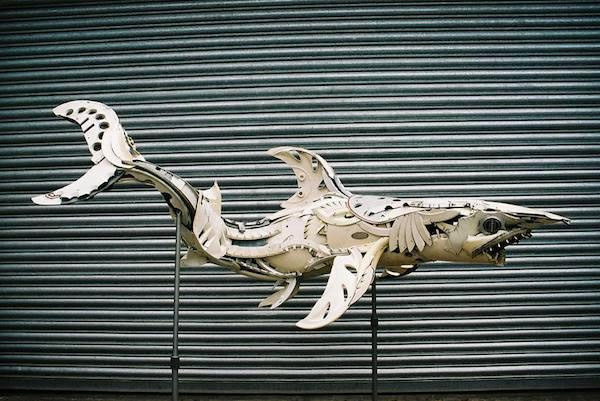 hubcaps shark